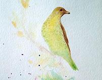 Bower Bird
