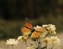 Kooperativa Butterfly