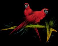 Birds, birds and birds