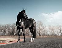 1 HORSEPOWER