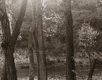 piedras y árboles