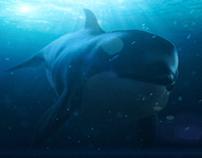 Zbrush Orca