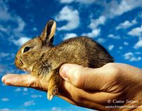 WILDLIFE ( mammals)