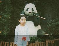 Plastic pand bear: 28 polaroids from around the world