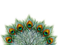 Set of peacock feather backgrounds