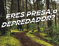 GW Bicycles - Campaña Animal Effect