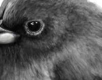 Oiseau gris