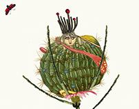 Metamorphoses: Dipsacus Αpiculata (collage)