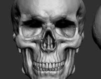 Skull study - zbrush+modo