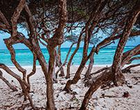 Aruba '19