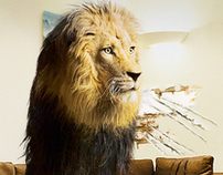 Lion at Home