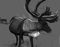 Wild animal study