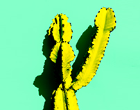 cactus minimal collection