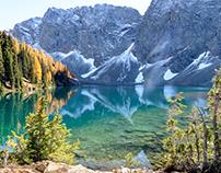 Larch's near Blue Lake, in the North Cascades, WA