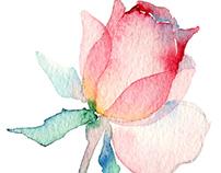 Watercolor english roses seamless pattern.