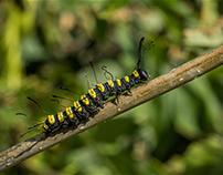 """caterpillars"""