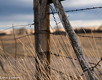 Fence and Grasses
