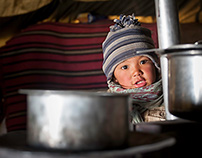 Pembam my little friend from Changthang, Ladakh