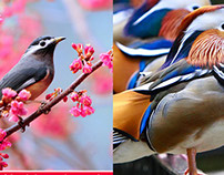 25 Most Beautiful Bird Photography examples and Tips fo