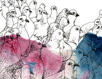 Pigeon Scratch