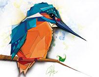 Colibri / illustration digital