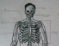 Anatomy & Life Drawing