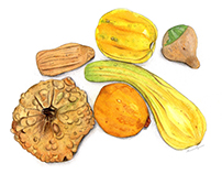 Six Varieties of Winter Squashes