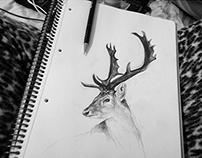 animals, crow, deer, drawing art, drawingtime, artist