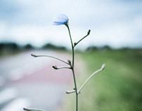 Heteren, Netherlands calm photography