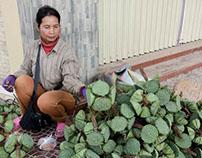 Cambodia/Laos Photography