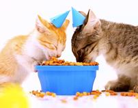 Happy International Cat Day (Cat Chow)