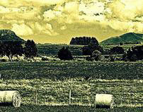 Auvergne crossed