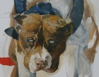 Studies of The Pit Bull