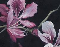 Flowers series. 2009 & 2010