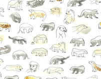 Honey Badger illustrations