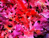 Colours in Autumn