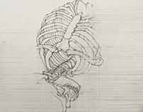 Skeleton Drawing