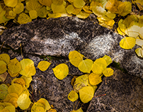 Aspen Forest Floor - Tessa Trail, Santa Fe, New Mexico