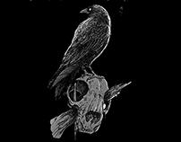 dinardo tattoo studio - crows
