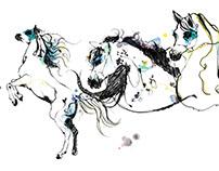 Dubai Arabian Horse Championships