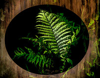 Northern Fern