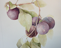 """ Plum "" 30 x 40 cm. Watercolor"