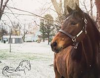 Rustbelt Equine Logo