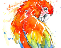 Macaw Parrot Studies