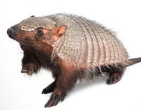 ACDelco I Armadillo Advertising