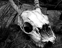 Skull Photography