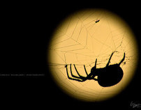 Moonlight Spider