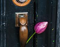 A Tulip Awaits
