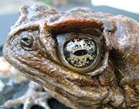 Toad Prop