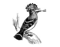 RAYGUN BIRDS